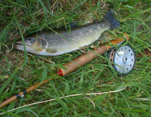 Brown trout caught with mayfly